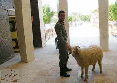 یکی از گوسفندان موزه آبادان در زیر گنبد مخروطی