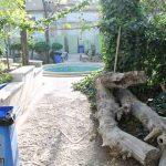درختان خشکیده و رها شده در خانه صادق هدایت