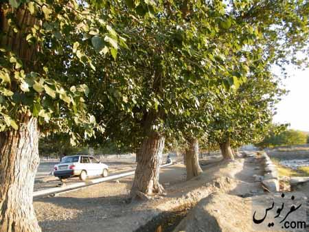 درختان کهن سال محوطه باغمزار ویرانی