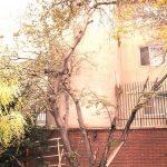 درخت ارغوان ...